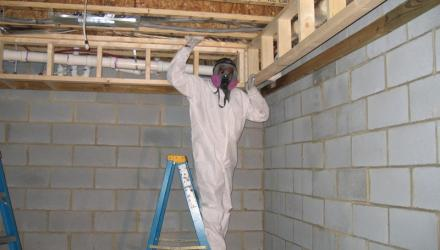 Basement mold remediation in Lillington