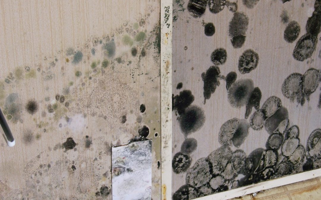 High Humidity Can Lead to Mold Growth in Your Home