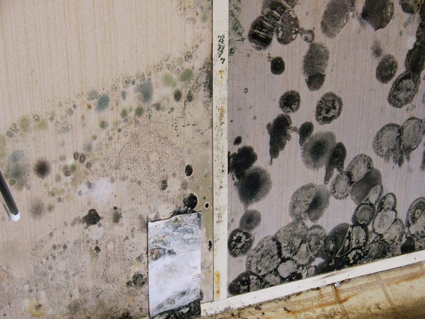 How to identify black mold - Black Mold On Walls