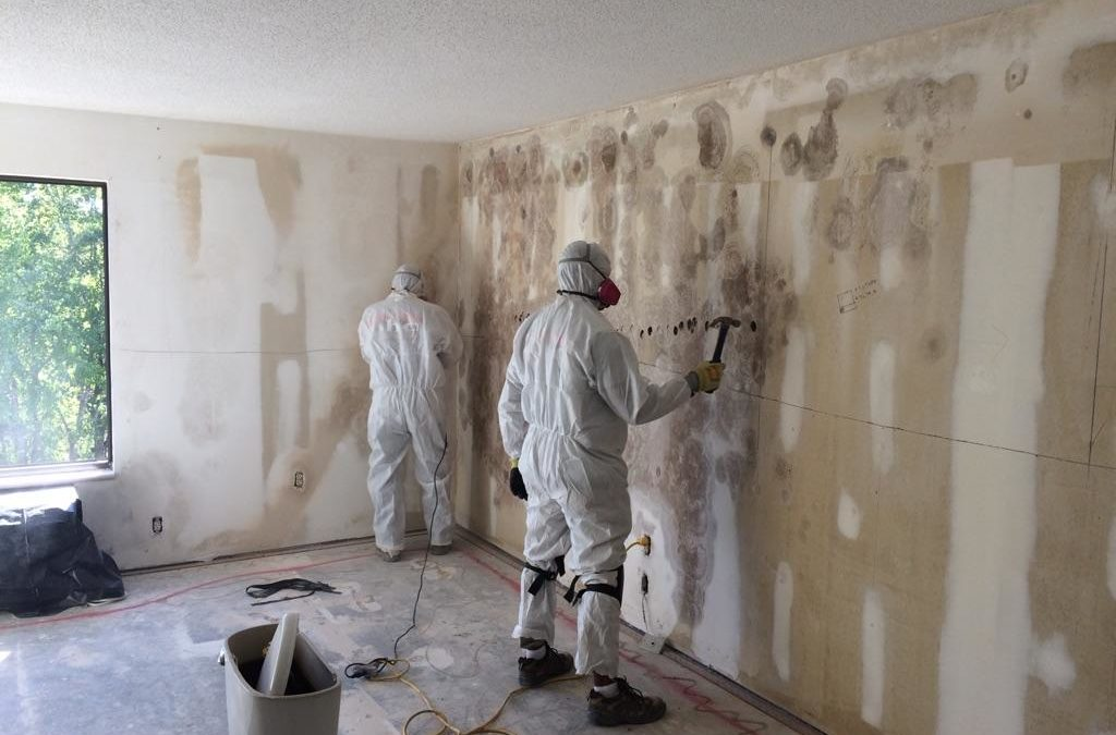 How can I clean mold in my home?